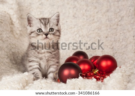 the little gray kitten plays New Year's spheres  #341086166