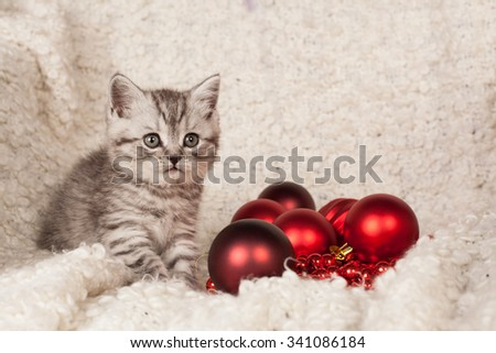 the little gray kitten plays New Year's spheres  #341086184