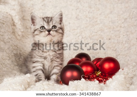 the little gray kitten plays New Year's spheres  #341438867