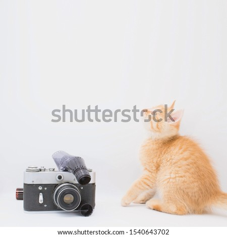 The little kitten is looking up. A kitten is sitting next to the camera. The concept of photographing pets. Square image format.