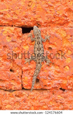 The lizard on red old  stone background