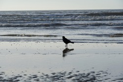 The lone crow taking a break