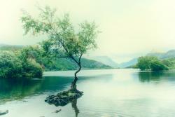 The Lone Tree - Llyn Padarn North Wales