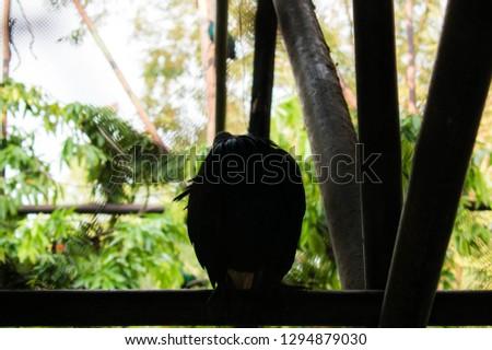 The loneliest bird #1294879030