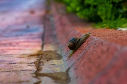 The lonely snail is trying to travel slowly on the blurred background stone road.