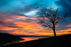 the lonely tree is watching the sunset