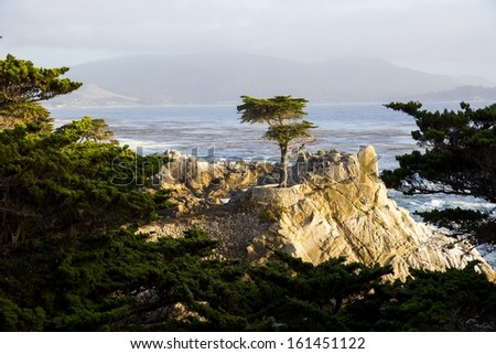 The Long Cypress Tree  on the 17 Mile Drive in California.
