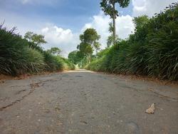 The long road in Wonosari tea plantation, Lawang, Malang, East Java, Indonesia was taken using a wide lens camera