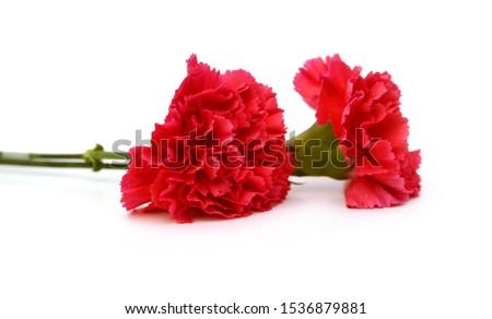 the long stem carnations gift on white #1536879881