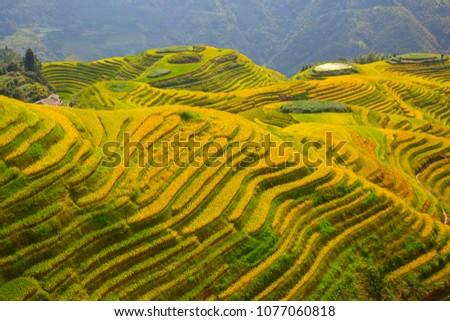 Longsheng Rice