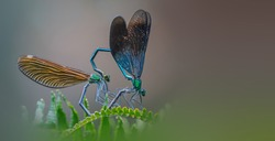 The love story of insects and dragonflies