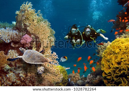 Stock Photo The loving couple dives among corals and fishes in the ocean