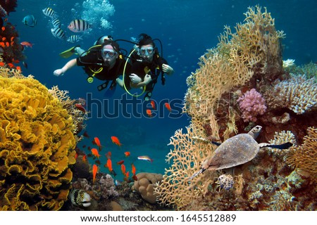 The loving couple dives among corals and fishes in the ocean Foto d'archivio ©