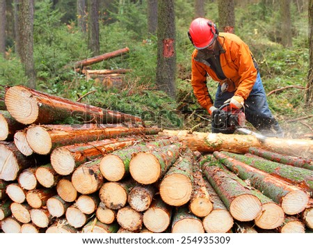The Lumberjack working in a forest.  Stock photo ©