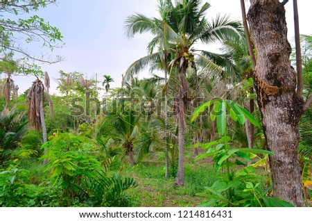 The lush foliage of Bang Kachao, the green lung of Bangkok, Thailand