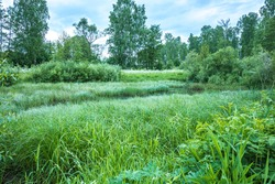 The lush vegetation of a small river in the countryside. The banks are naturally overgrown with water plants and bushes. Scenic views, places to hike and relax.