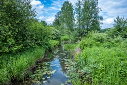The lush vegetation of a small river in the countryside. The banks are naturally overgrown with water plants and bushes. Scenic views, places to hike and relax outdoors.