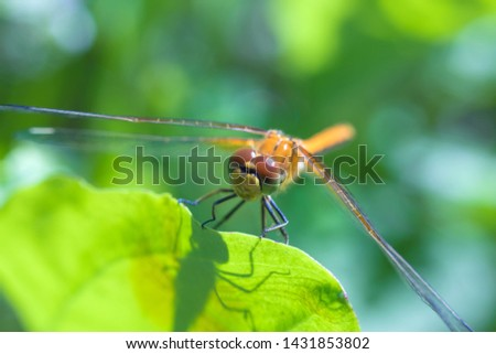 The macro shot of the beautiful dragon fly reaxing on the grass in the sunny summer or spring day #1431853802