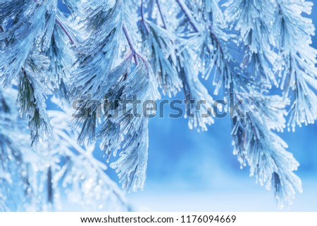 The magic branches of the pine are snow-covered and covered with ice. Winter is a beautiful day. Frosty mood.  #1176094669