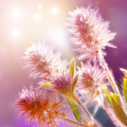 The magical image of nature. Floral gentle background. Beautiful wildflowers. Spring wildflowers, yellow and pink flowers, macro. Flowers in the sun shine with beautiful bokeh, copy space.