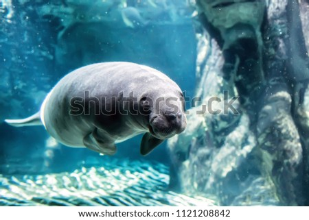 the manatee into the blu