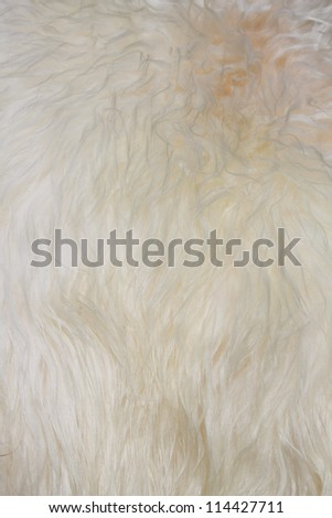 The manufactured skin of a sheep