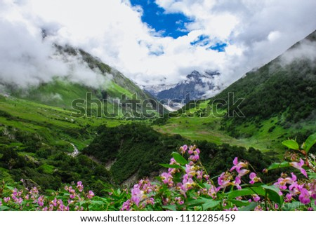 The mesmerizing beauty of valley of flowers captured in the month of August #1112285459