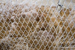 The metal wire mesh fence is covered with white hoarfrost, snow, ice on a winter day. Frozen hedge texture backdrop. Cold weather scene background