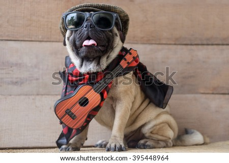 The Mexican indy guitarist musician pug dog.(Pug dog wearing Musician costume.)