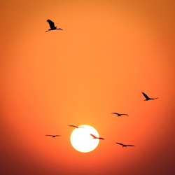 The migratory birds moving to their nest at the dusk.