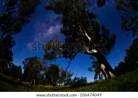 The milky way over old eucalypt trees. High iso to capture stars and milky way with no movement.