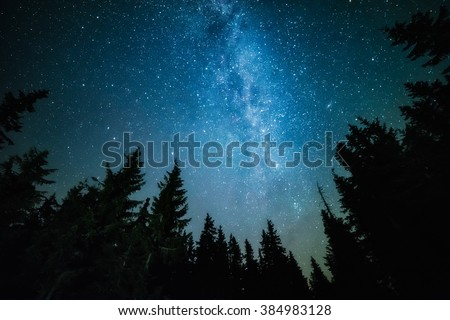 The Milky Way rises over the pine trees on a foreground #384983128