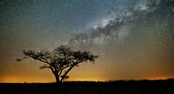 The milkyway in at African wilderness