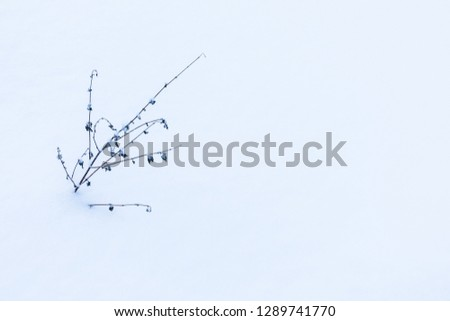 The minimalistic beautiful nature background of old grass or weed under the snow in the cold frost an cloudy day. The shot is made in a high key. #1289741770