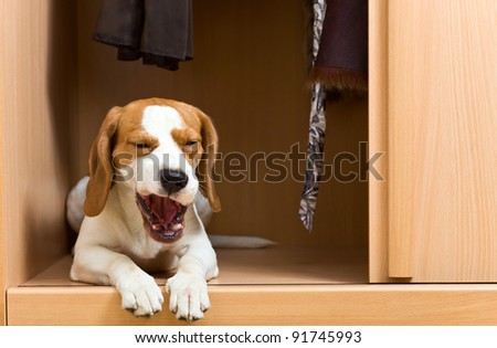 The missing dog has climbed in a wardrobe.