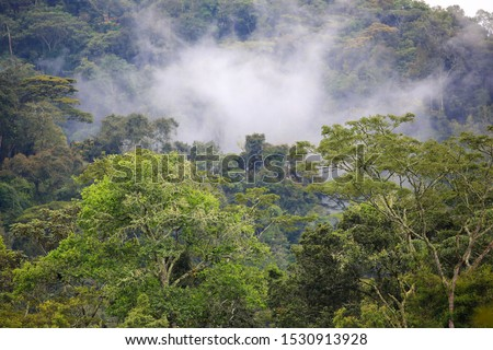 The misty Bwindi Impenetrable Forest in Uganda is a primeval forest reaching over 2600 m, and one of the most diverse areas on Earth where half of the world's highly endangered mountain gorillas live.
