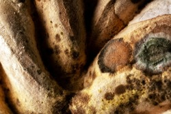 The mold is yellow with dark spots close-up. Fungus texture. Mold on rotting food.