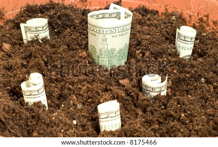 The money growing from a ground