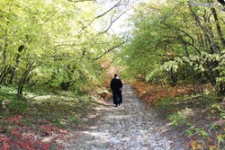 the monk walks alone along the forest autumn path between the trees