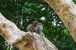 The monkey brotherhood alive in forest looking around to see environment