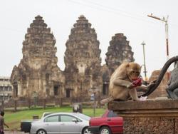 the monkey drinking a fluit syrap in front of Phra Prang Sam Yot Lopburi city Thailand