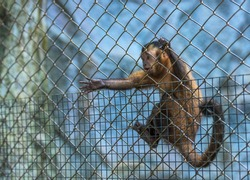 The monkey was kept in a cage that was submitted a hand out for help.