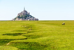 The Mont Saint-Michel tidal island, situated in France on the limit between Normandy and Brittany, with the dry bed of a stream winding in the foreground and a sheep grazing on the salt meadows.