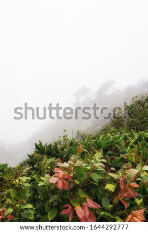 The Monteverde Cloud Forest Reserve (Reserva Biológica Bosque Nuboso Monteverde) is a Costa Rican reserve located along the Cordillera de Tilarán within the Puntarenas and Alajuela provinces.