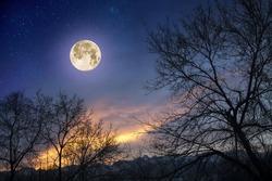 The moon at dawn.