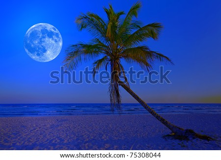 The moon shining in a deserted tropical beach at midnight with a coconut palm tree in the foreground - stock photo
