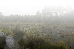 The Moor's habitat in which many animals and plants are native.