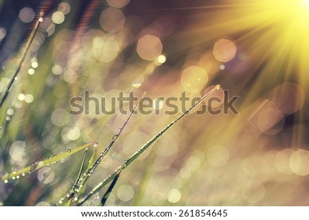 The morning dew. Abstract background of shining a bright morning dew, vintage style effect picture