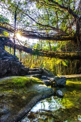 The morning sun at double decker living root bridges of Nongriat in Meghalaya, India