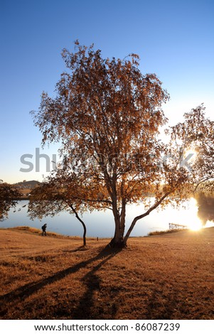 the morning sun behind the birch tree in lakeside at autumn